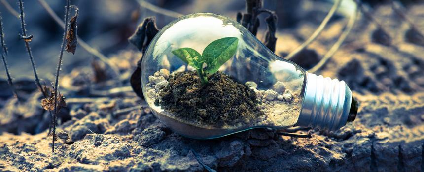 Plant growing in soil that is inside a lightbulb.